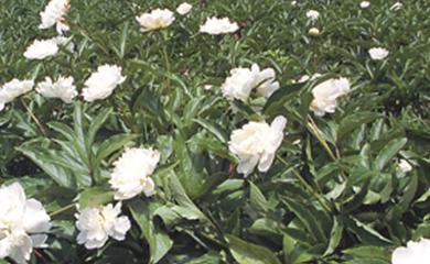 植物 写真
